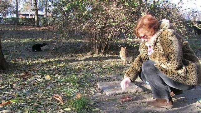 Los 400 gatos abandonados de El Retiro
