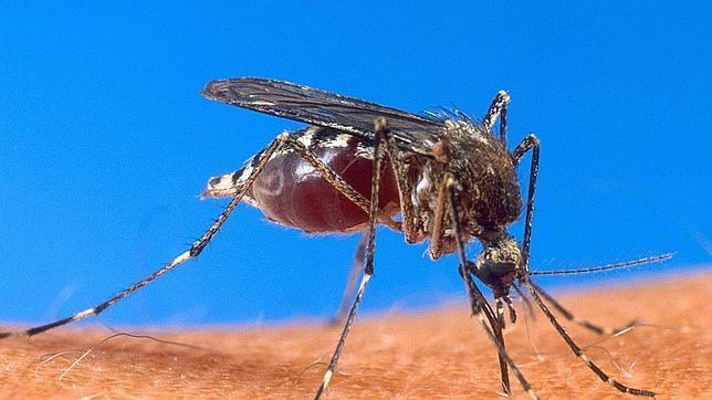Se investiga el posible uso de mosquitos infectados con malaria como armas durante la Segunda Guerra Mundial
