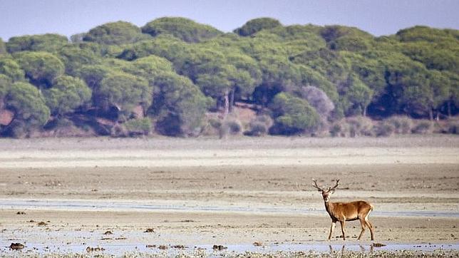 El corazón de Doñana, en riesgo por sobreprotección