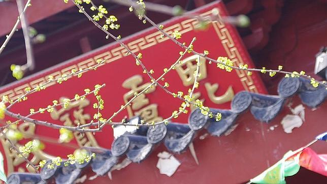 La fiesta de «Qingming» celebra la llegada de los brotes verdes
