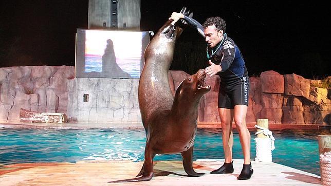 Exhibición con mamíferos