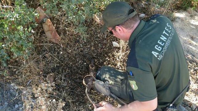 Agentes medioambientales requisan artes ilegales de caza en Toledo y Ciudad Real
