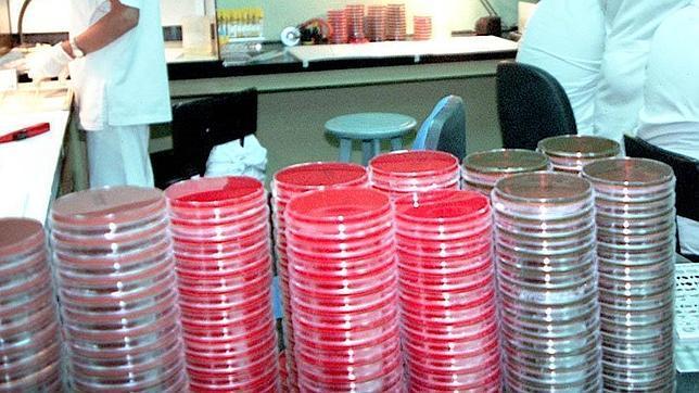 Muestras de ántrax en un laboratorio