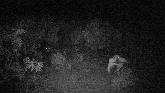 En la captura, se observa a un jabalí a la izquierda y a la misteriosa criatura a la derecha