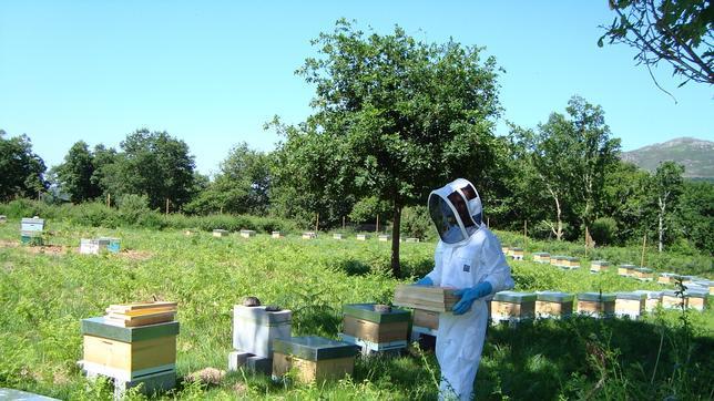 Los neonicotinoides se usan en más de 120 países en más de 1.000 cultivos y aplicaciones, y representan al menos una cuarta parte del mercado de insecticidas del mundo