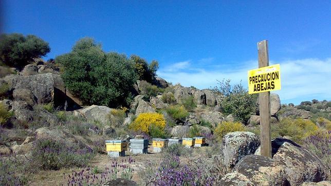 La abeja melífera se adapta a cualquier tipo de flora y cuando elige una determinada especie vegetal trabajan con ella hasta que agotan sus reservas de néctar y polen
