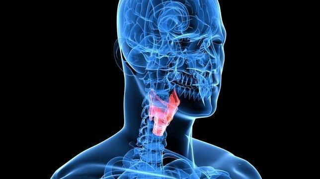 La biometría de voz toma como referencia el movimiento de determinados músculos