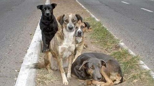 En el último año las protectoras en España recogen un animal cada cinco minutos