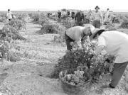 Las nuevas órdenes pretenden revitalizar el importante sector vitivinícola de la regiónFoto: ABC