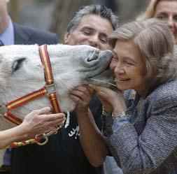 Doña Sofía bautiza a «Lluvia», un burro protegido en peligro de extinción