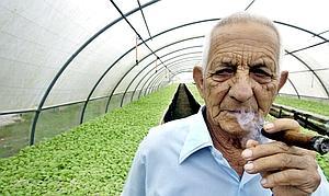 Muere Alejandro Robaina, el productor de puros más famoso de Cuba