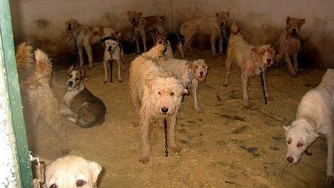 El maltrato animal sin saña ya es delito