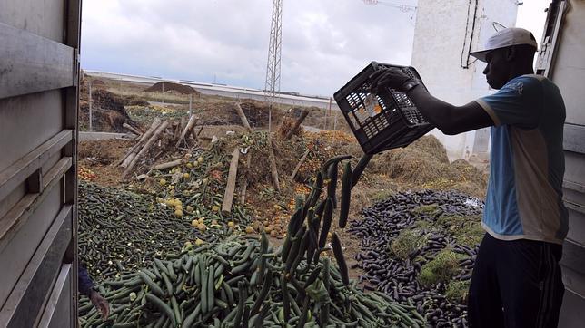 Almería desmonta el bulo del pepino