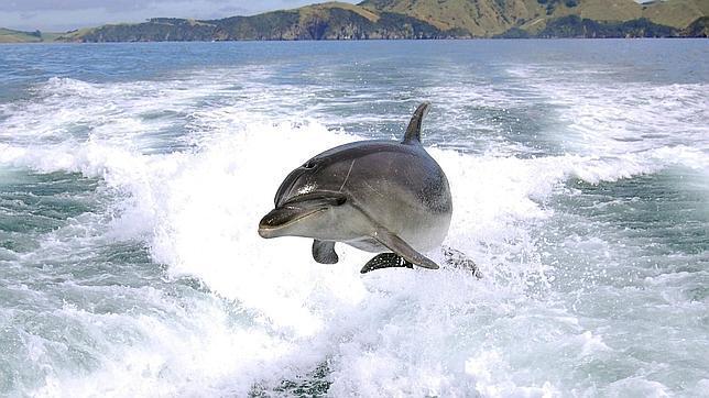 Los delfines son «personas no humanas»