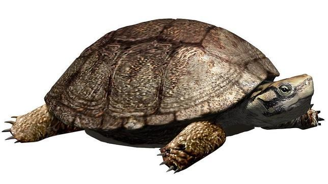Una tortuga de la época de los dinosaurios aparece en Lérida