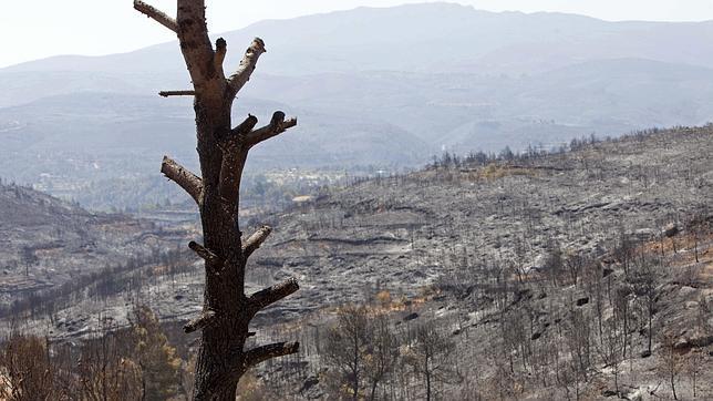 El incendio de Andilla, sin llama
