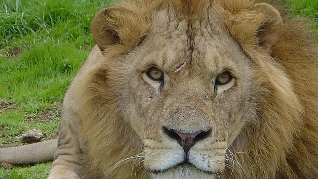 Los ecologistas se oponen al traslado de animales salvajes desde Namibia hasta Cuba