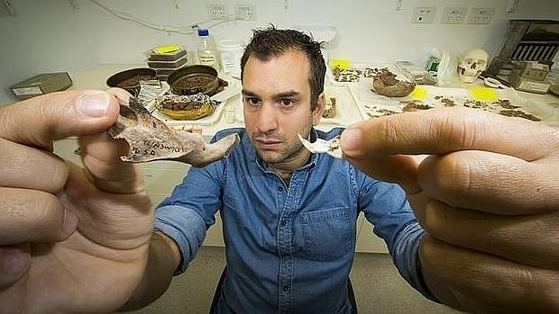 El doctor Julien Louys compara el tamaño de la mandíbula de una rata gigante con el de otra moderna