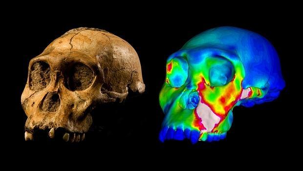 El mordisco humano del Australopithecus sediba