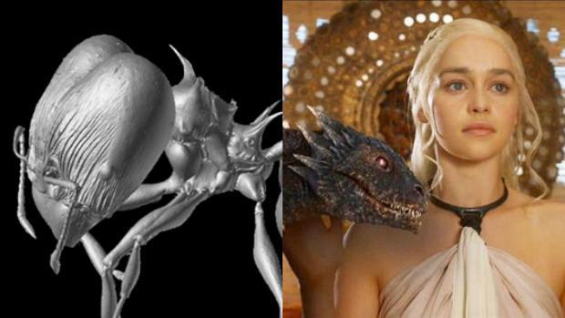 Pheidole drogon, a la izquierda, una de las nuevas especies descubiertas