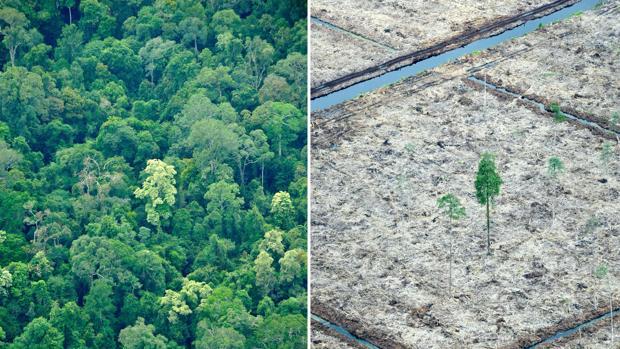 La mayoría de la superficie de tierra del planeta ya ha sido explotada en beneficio del desarrollo socio-económico