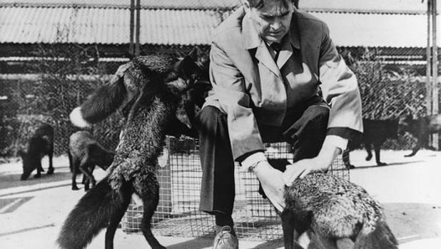 El genetista Dmitry K. Belyaev, con sus zorros domesticados en una imagen de archivo