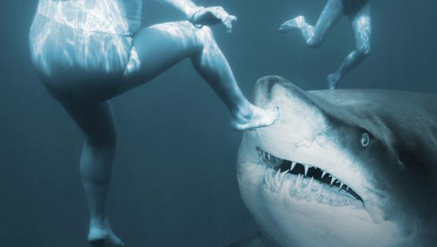 Recreación de unos bañistas nadando cerca de un tiburón