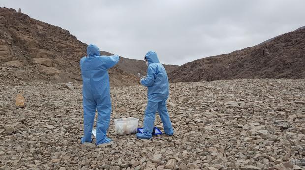 Dos investigadores recogen muestras en el desierto de Atacama. El hallazgo implica que en Marte también podrían sobrevivir microbios y ser transportados por el viento