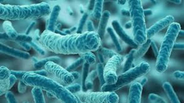 Descubren que los microbios del intestino son capaces de predecir nuestra muerte