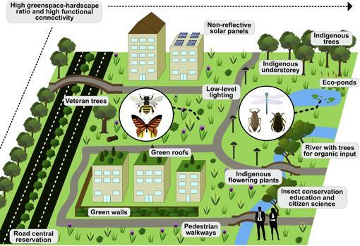 Propuesta para fomentar la conservación de los insectos en las ciudades