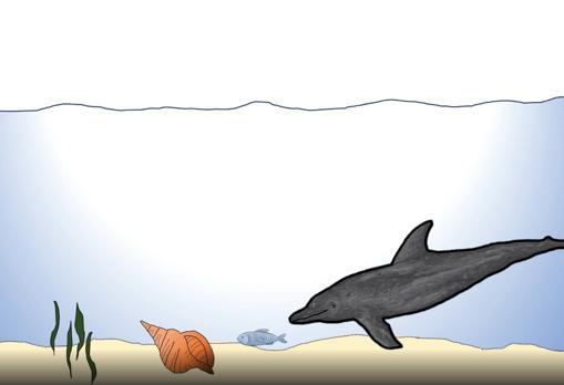 Los delfines aprenden a usar herramientas de sus colegas