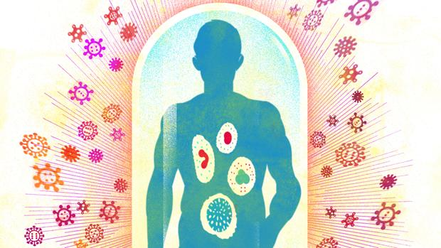 El sistema inmunitario, el maravilloso escudo que ganará la guerra contra el coronavirus