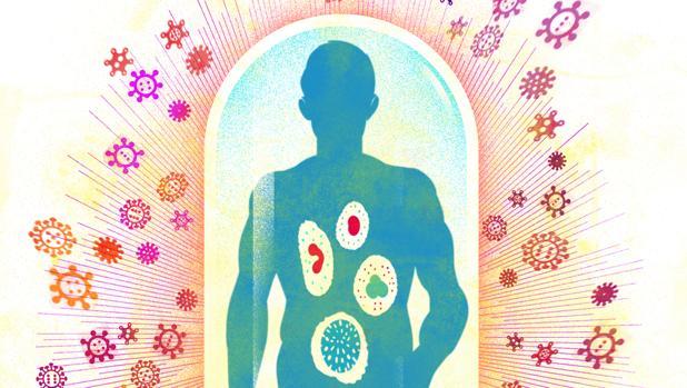 Así funciona el sistema inmunitario, el «ejército» que derrotará al coronavirus