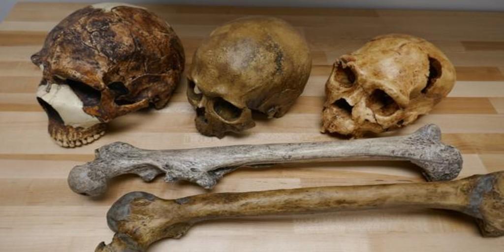 Cómo el clima cambió el tamaño del cuerpo humano