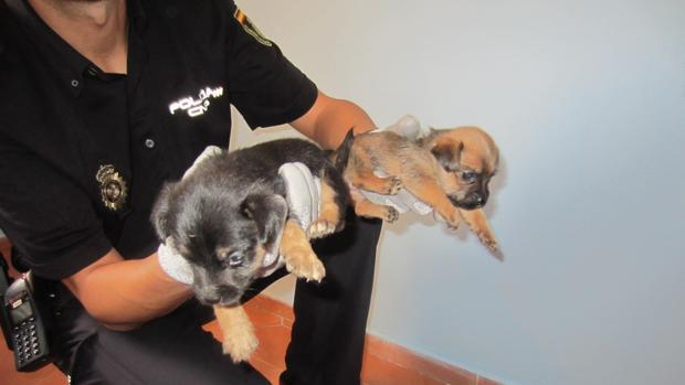 Imagen de dos de los cachorros rescatados por la Policía Nacional