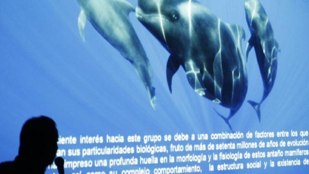 Un conferenciante habla de la «estructura social» de los cetáceos en aguas canarias