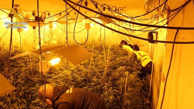 Fotografía del interior del almacén acondicionado como sofisticado invernadero de cannabis