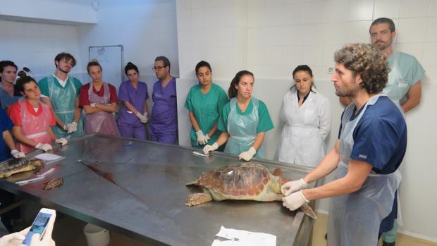 Imagen del taller de tortugas