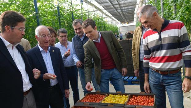 Casado durante una visita a una plantación hortofrutícola durante la campaña electoral en Andalucía