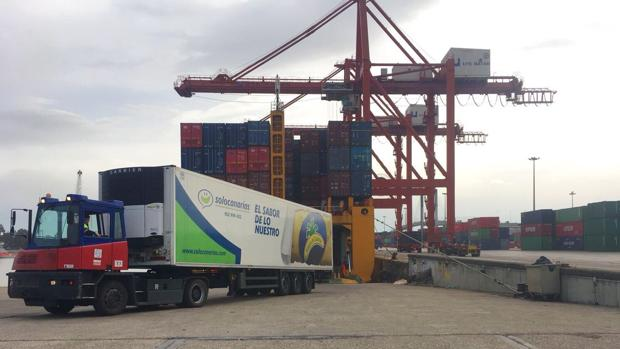 Plátanos de Canarias en Sevilla llegados en en un buque de MacAndrews