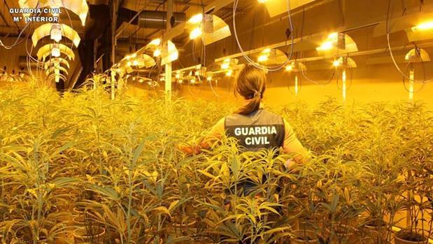 Panorámica de una de las naves industriales preparadas para cultivar grandes cantidades de cannabis