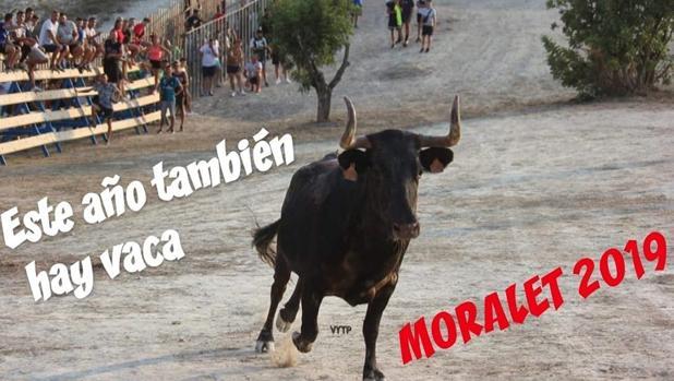 Foto difundida por la Asociación de Vecinos Moralet Alto sobre la suelta de vaquillas este año