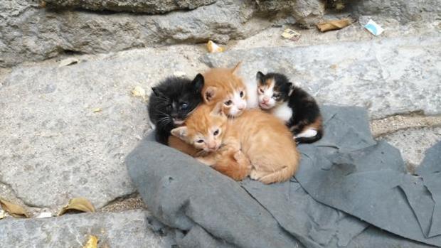 Imagen de archivos de unos gatos recién nacidos