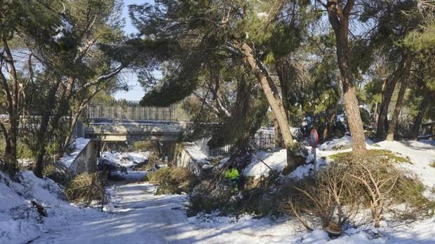 Filomena daña más del 60% de los árboles de los parques históricos de Madrid