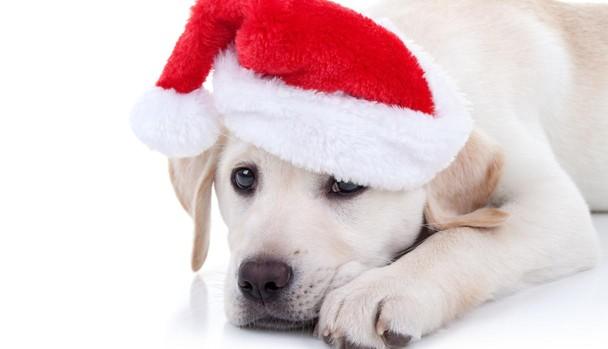 Un animal no es un juguete ni un regalo, recuerdan desde la Fundación Affinity