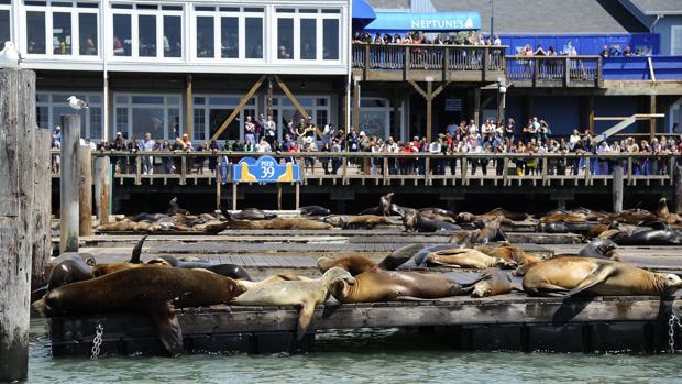Imagen de archivo de San Francisco Pier (California)