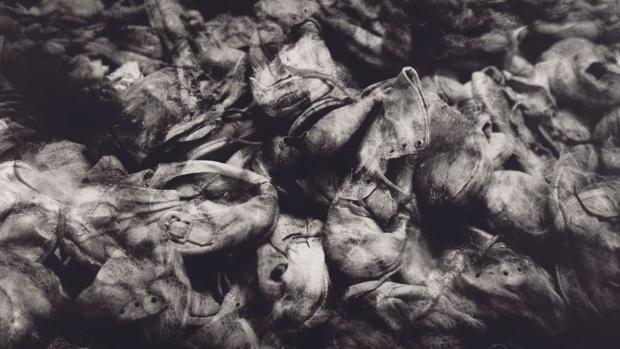El dolor de Auschwitz a través del propio