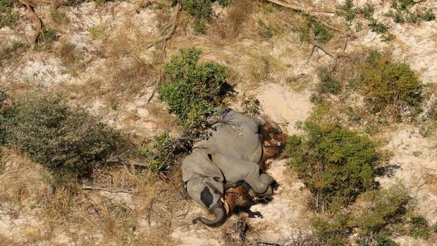 Al menos 275 elefantes aparecen muertos en Botsuana sin una causa aparente