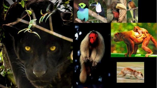 La evaluación de la biodiversidad es difícil en zonas alejadas y remotas utilizando métodos tradicionales