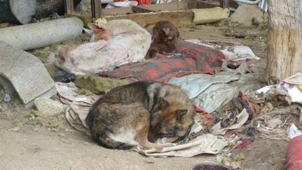 El Seprona ha constatado la comisión de 783 infracciones penales de maltrato/abandono de animales domésticos